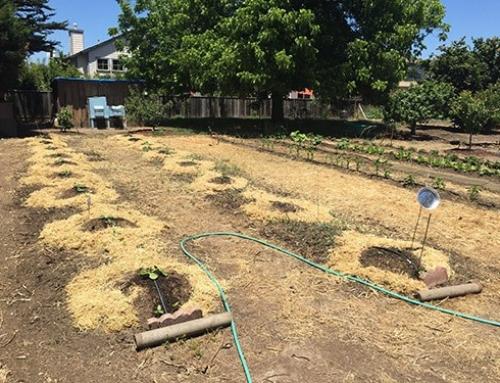 Pumpkins planted!